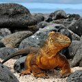 Galapagos 4 days cruise