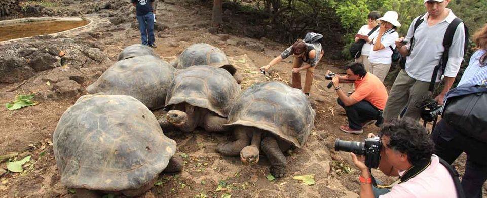 Galapagos Christmas 2020 2020 Christmas Peru and Galapagos Tour   Galapagos tour