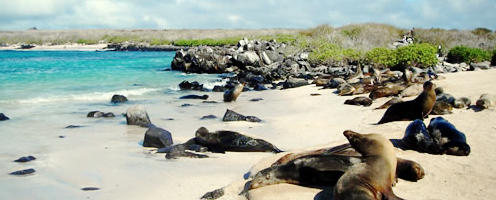 Ecuador & Galapagos Adventure Land Tour