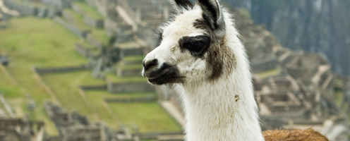 Escorted Fixed departure Tours <br />Llama trek