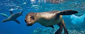 The Private Collection 10 day Galapagos Islands & All-Private