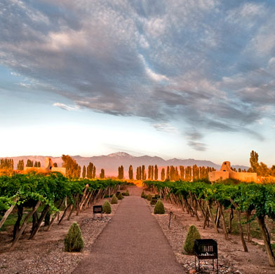 Wine Tour of Argentina with Cordoba
