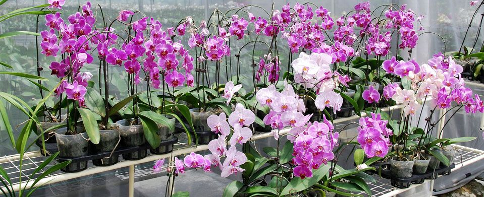 Orchid Appreciation Tour of Peru
