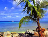 Caribbean Escapes Trinidad Tour