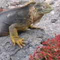 Adventure Peru & Galapagos Tour