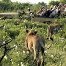 The Ultimate African Safari Signature Tour