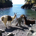 Escorted Fixed departure Tours <br>Llama trek