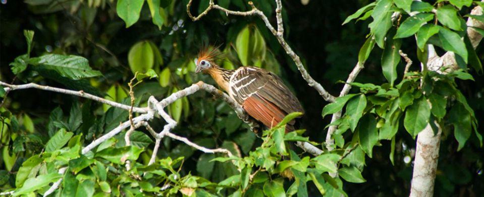 Tambopata Jungle Tours Review